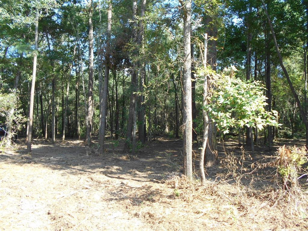 TBD Hwy 105 Property Photo - Saratoga, TX real estate listing