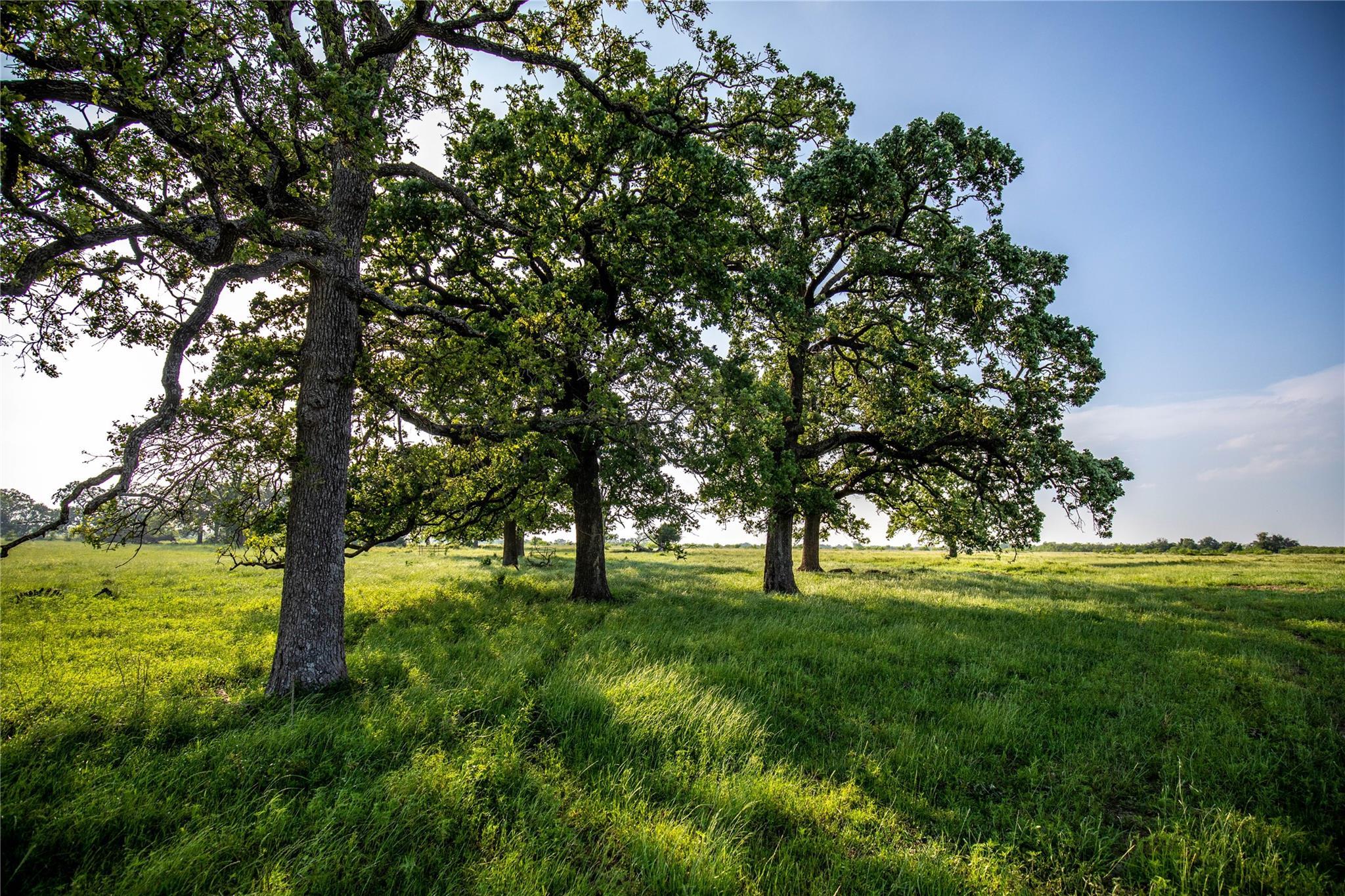 Tbd Fm 1373 Property Photo