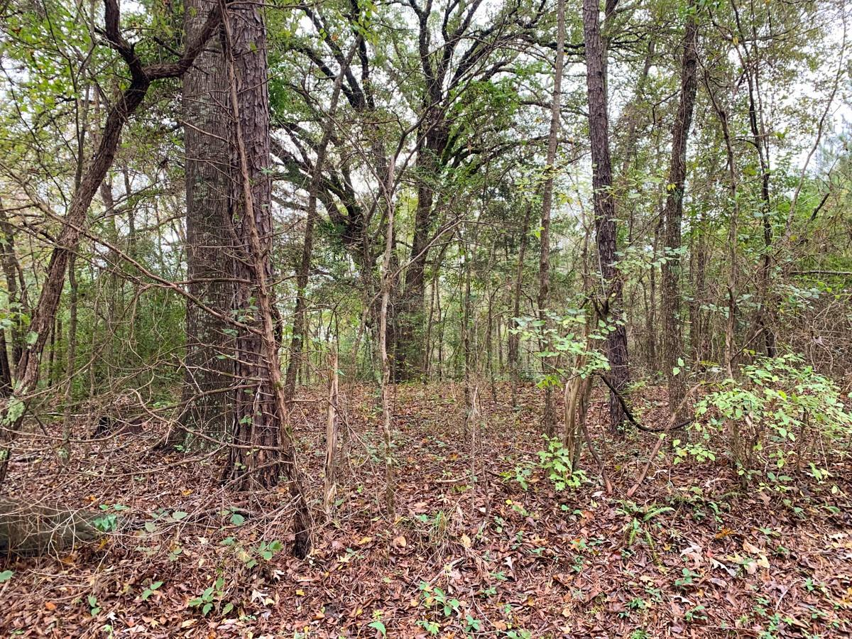 0 CR 136 Property Photo - Overton, TX real estate listing