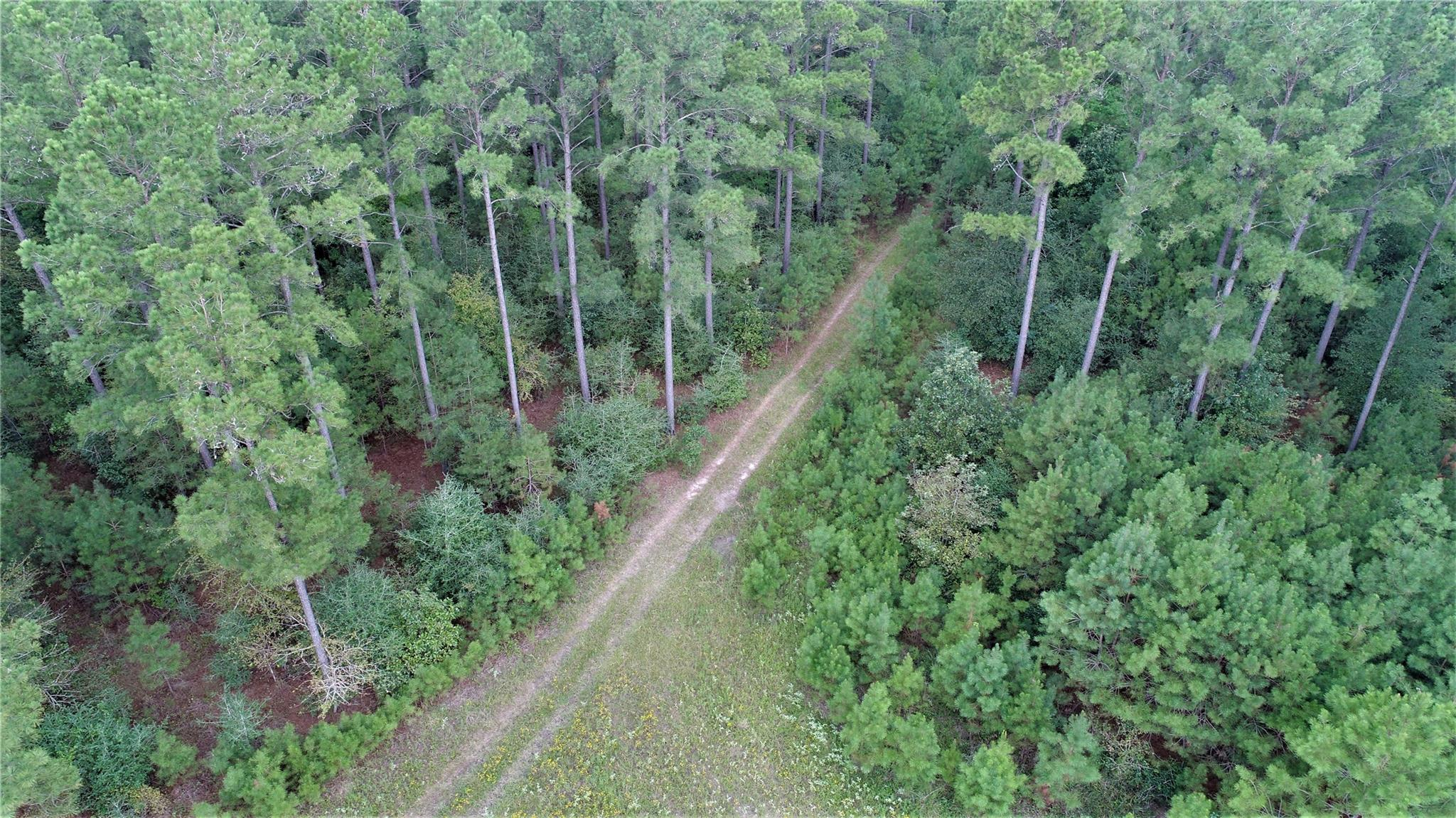 TBD CR 3540 Property Photo - Lovelady, TX real estate listing