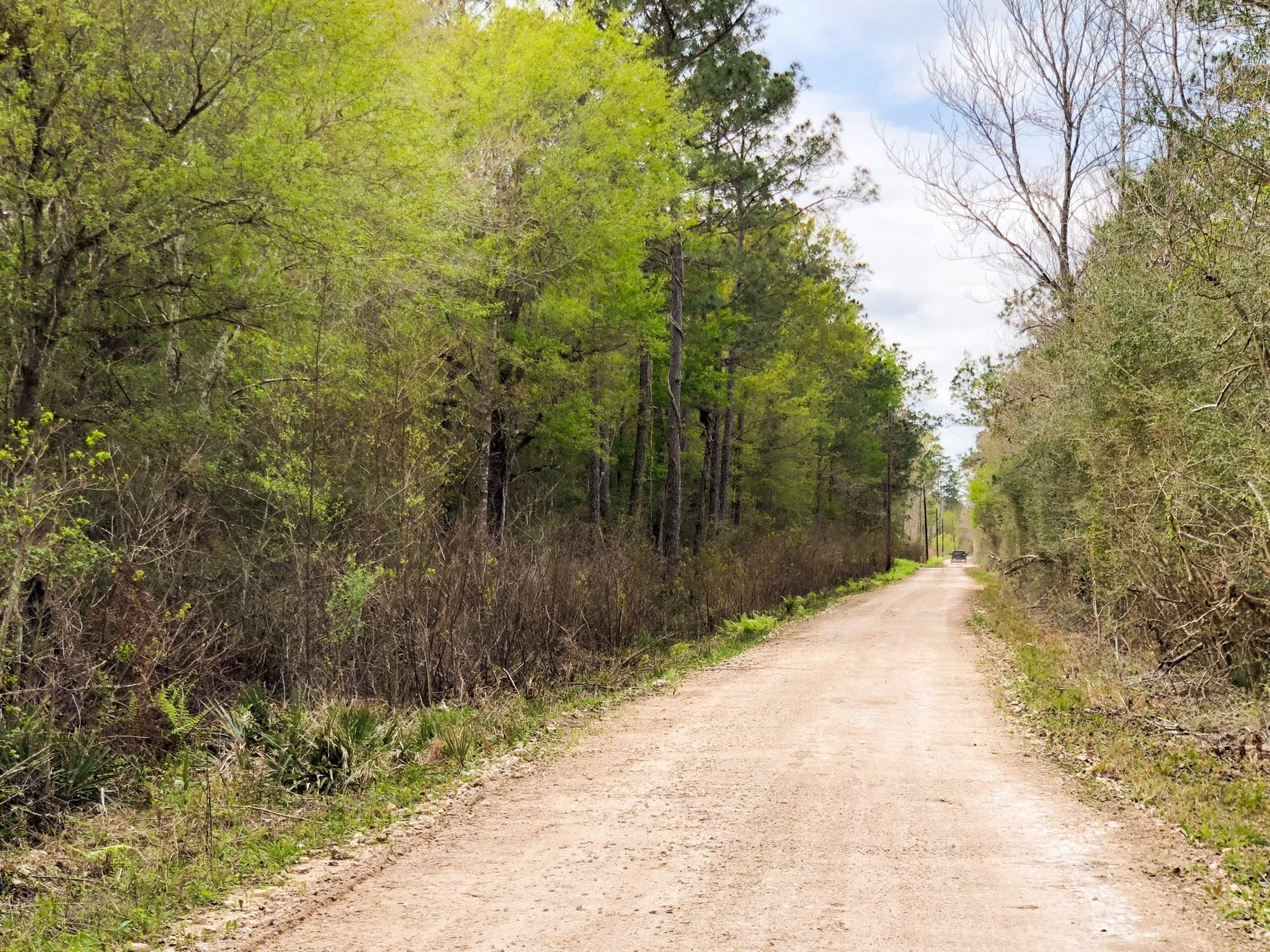 000 County Rd 3132 Property Photo - Mauriceville, TX real estate listing