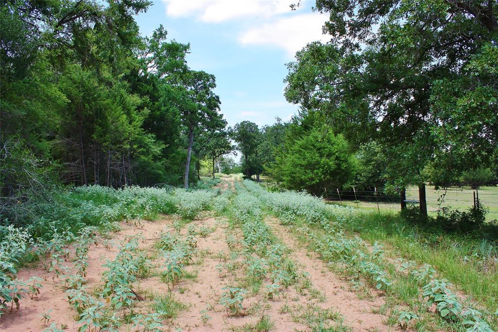 43.45 Acres County Road 493 Property Photo - Marquez, TX real estate listing