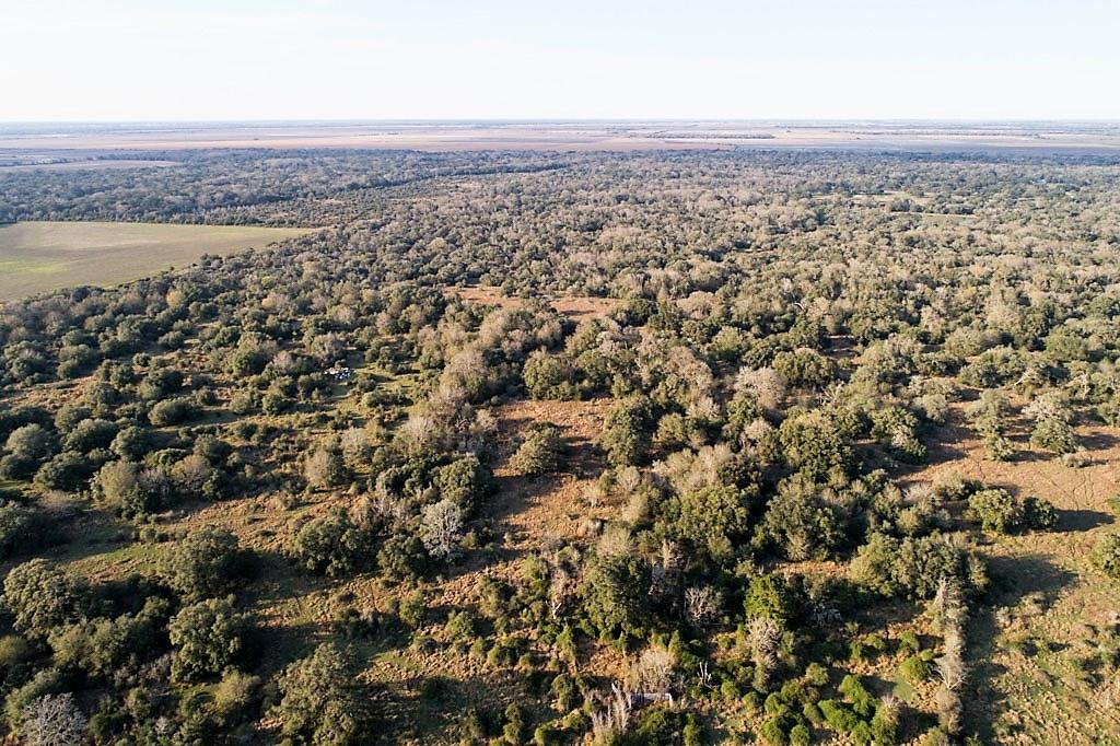 0 Dewberry Lane Property Photo - Louise, TX real estate listing