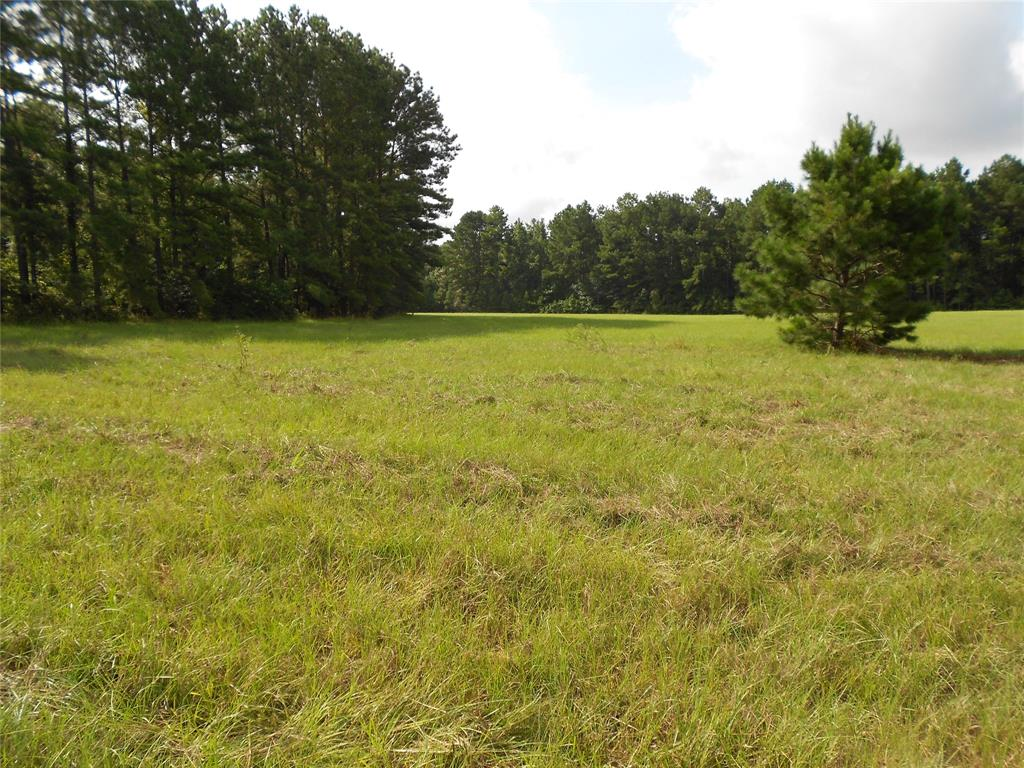 Horace Rd. Fm 358 - Antioch Or Possum Road Property Photo - Groveton, TX real estate listing