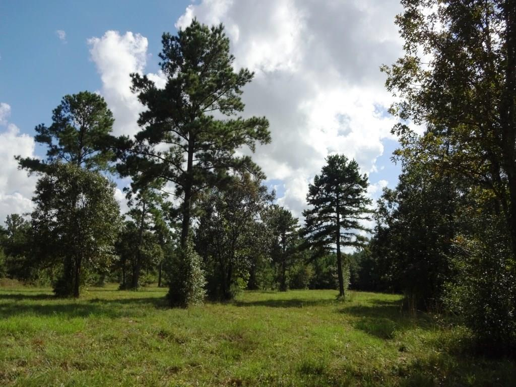 TR 30AA 16.506 Ac.,Felix Currie Road, Oakhurst, Texas 77359, Property Photo - Oakhurst, TX real estate listing