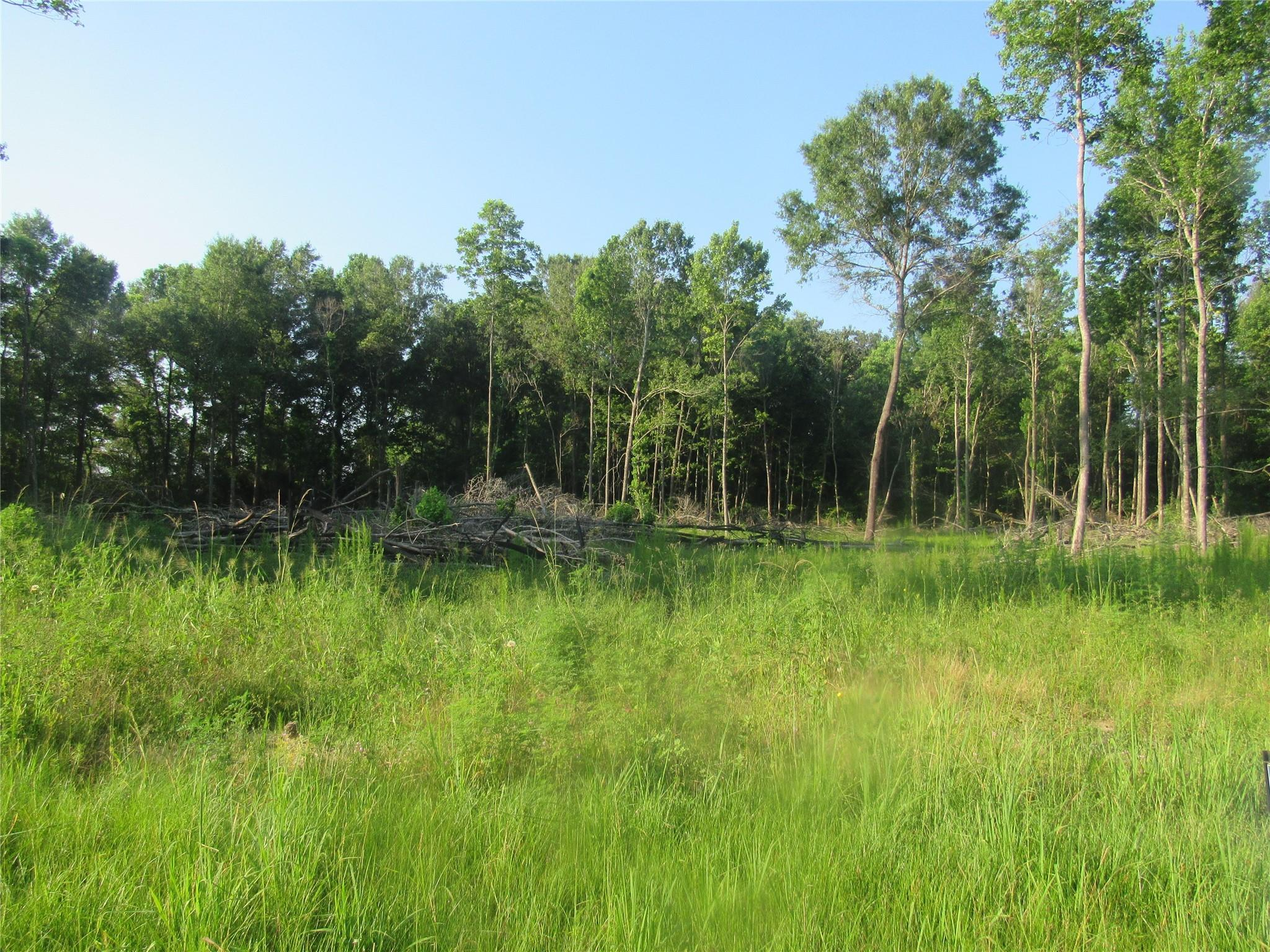 O Unimproved 4 Acres County Road 2068 Property Photo