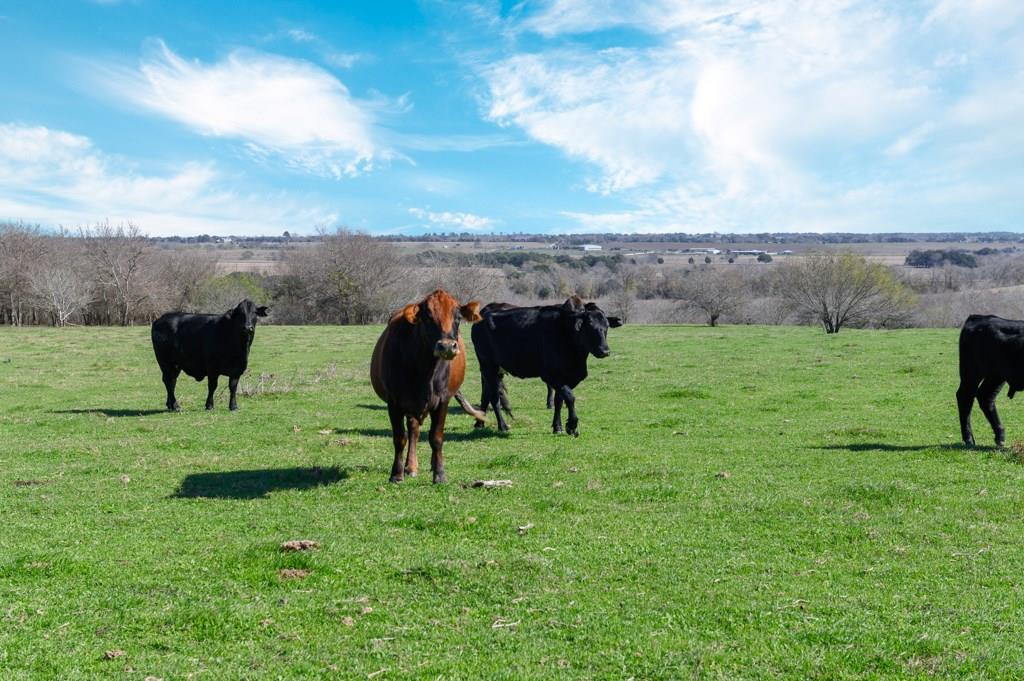 TBD FALKE-HEINRICH RD Property Photo - Schulenburg, TX real estate listing