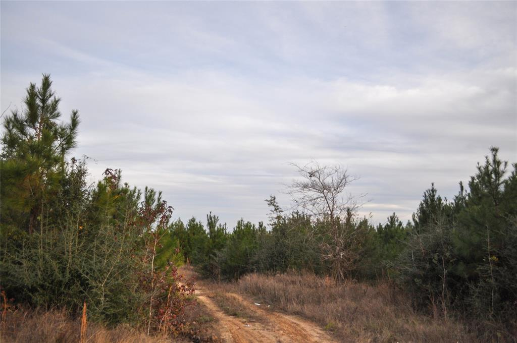 000 CR 3725 Property Photo - Colmesneil, TX real estate listing