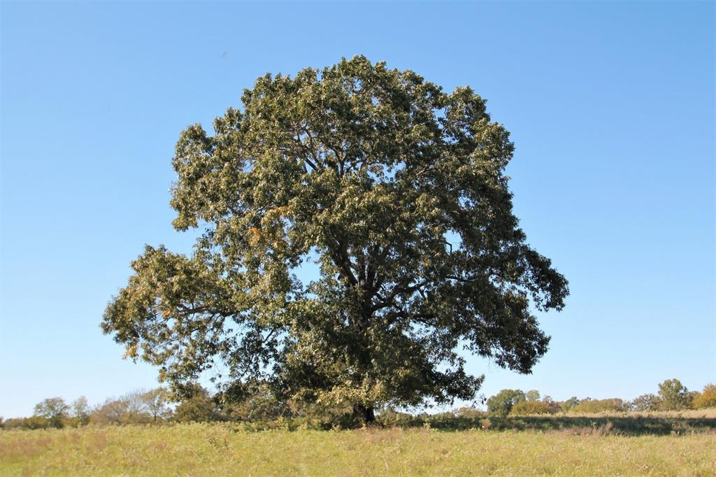 77 AC County Road 1493, Winnsboro, TX 75494 - Winnsboro, TX real estate listing