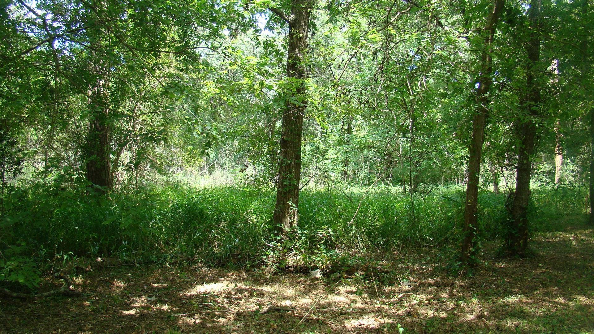 1311 Woodvine Property Photo