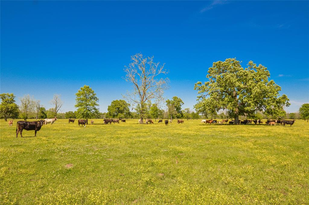 1258 County Road 2117 Property Photo - Cleveland, TX real estate listing