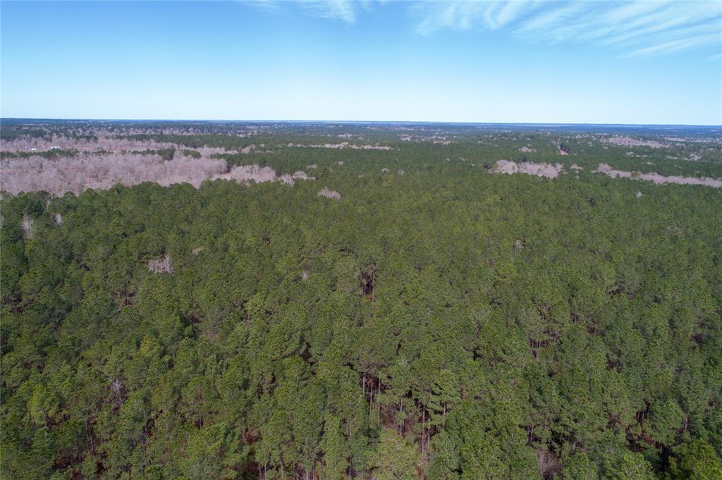 30 Acres Old Dodge Road, Oakhurst, TX 77359 - Oakhurst, TX real estate listing