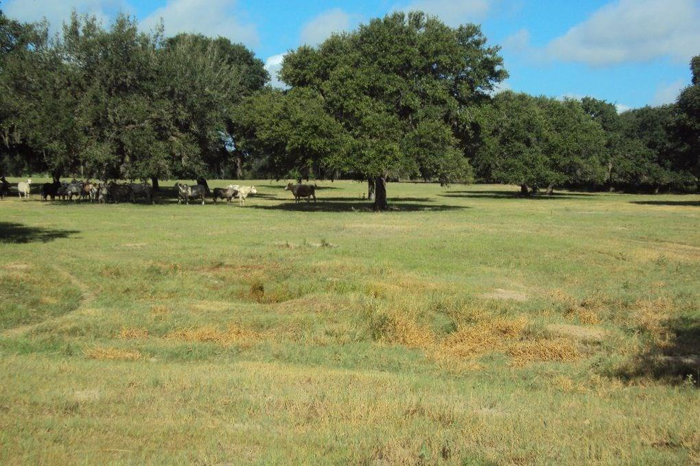 1622 Country Road 122 Property Photo - Hallettsville, TX real estate listing