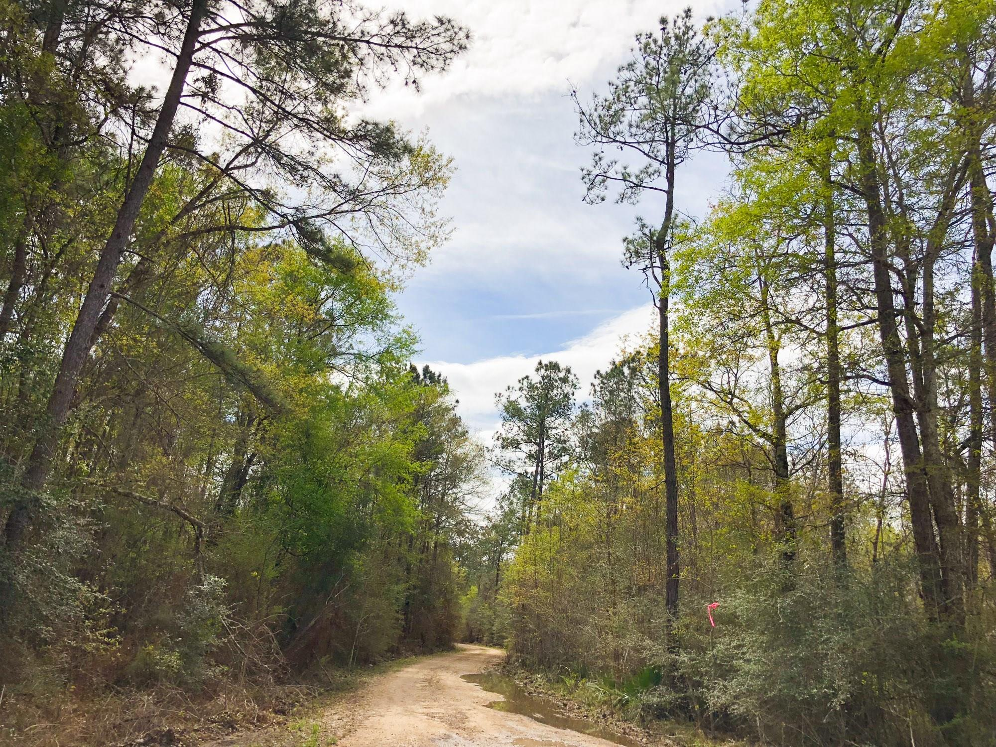 0000 CR 3132 Property Photo - Mauriceville, TX real estate listing