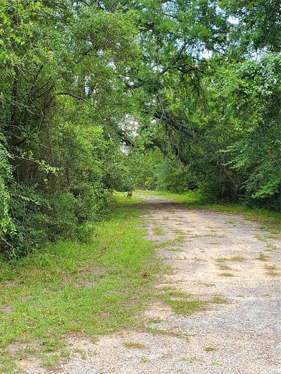 0 Callie Drive, Hempstead, TX 77445 - Hempstead, TX real estate listing
