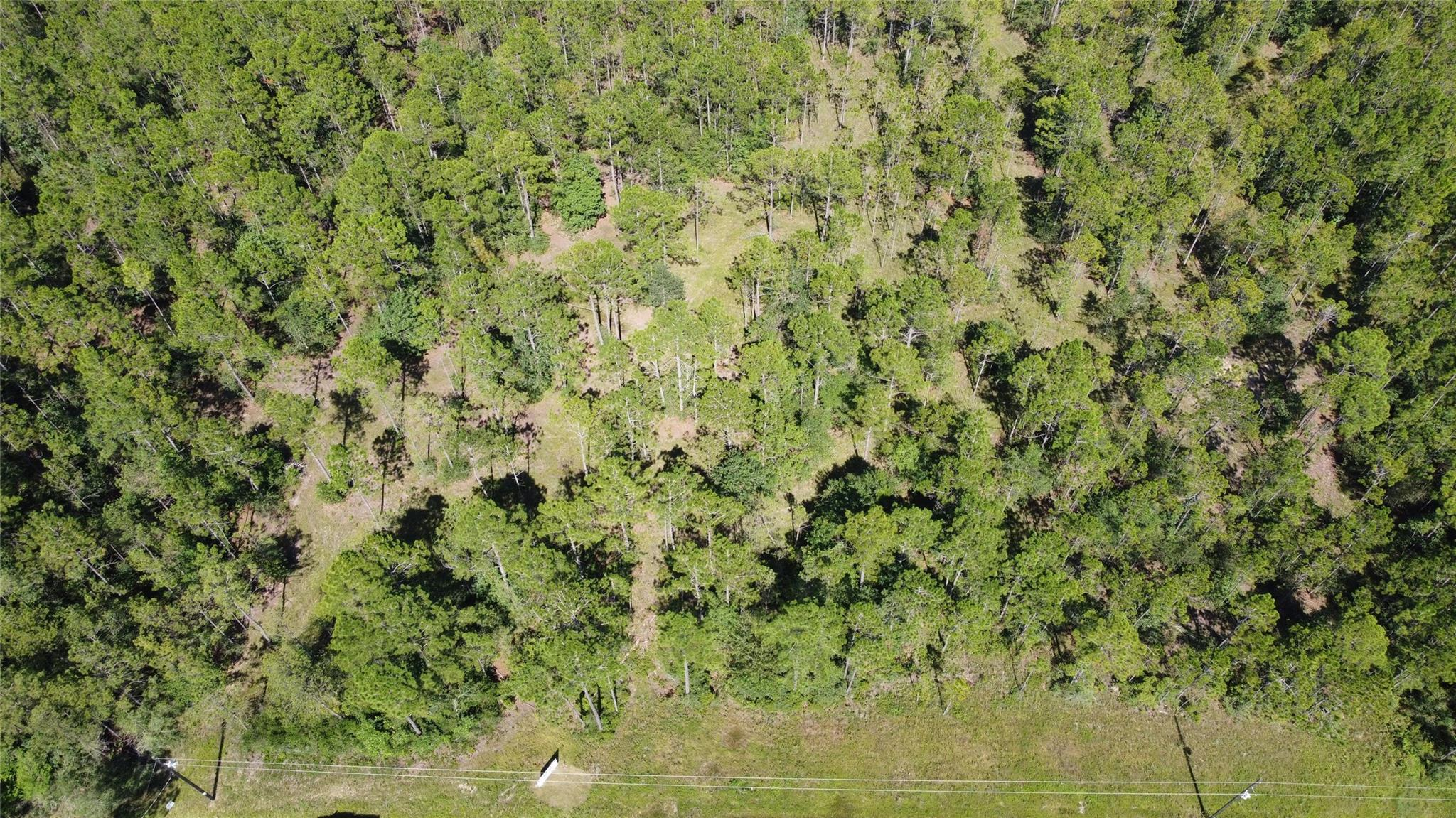 Tract 2 Whispering Pines Property Photo - Lumberton, TX real estate listing