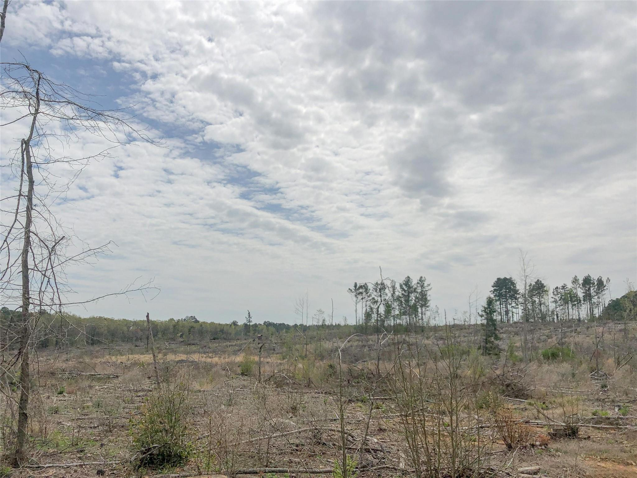 0 CR 1779 Property Photo - Jefferson, TX real estate listing