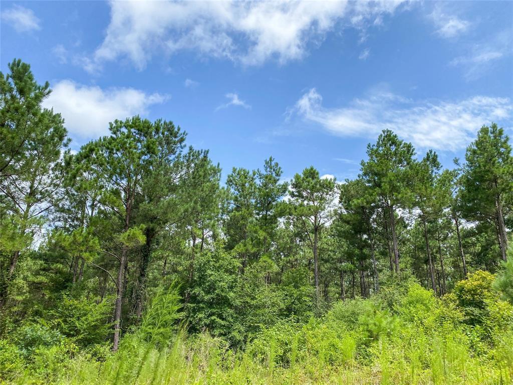 000 FM 355 Property Photo - Groveton, TX real estate listing