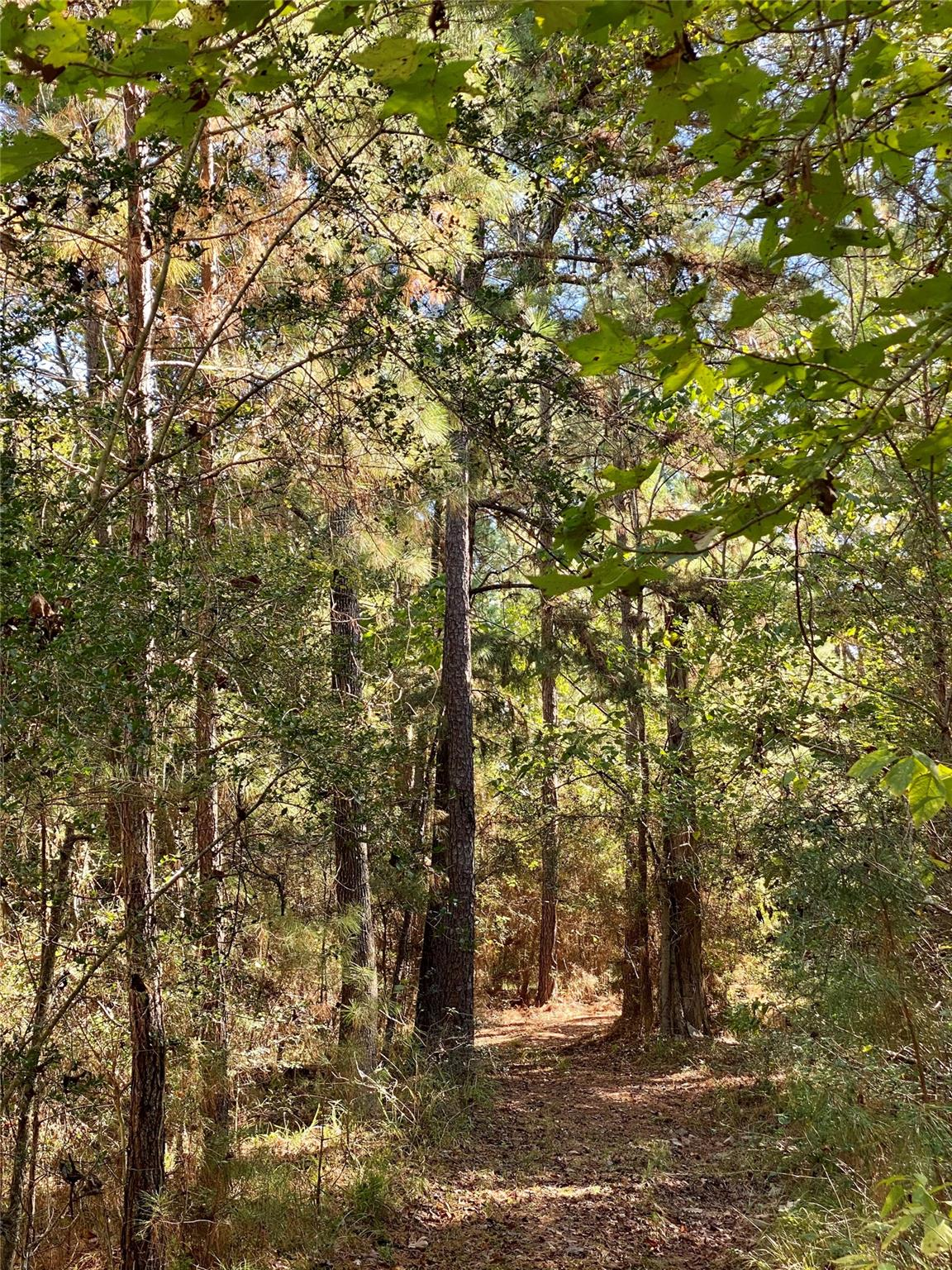 287 Fm 62 Property Photo - Moscow, TX real estate listing
