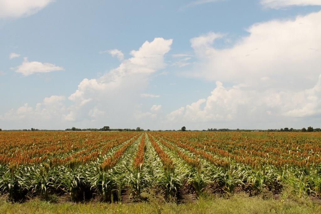 000 Koym Road, Beasley, TX 77417 - Beasley, TX real estate listing