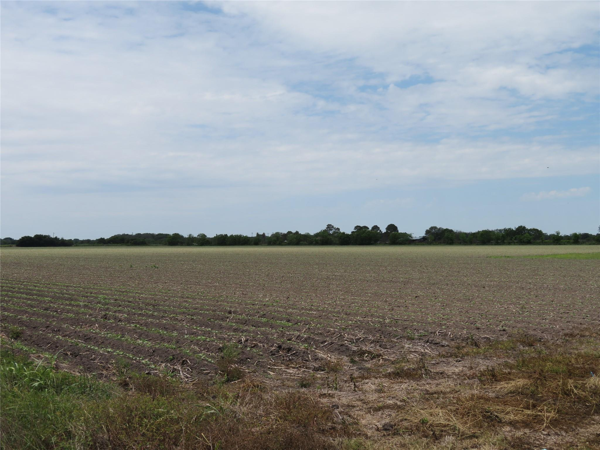 3046 County Road 356 Property Photo - Louise, TX real estate listing