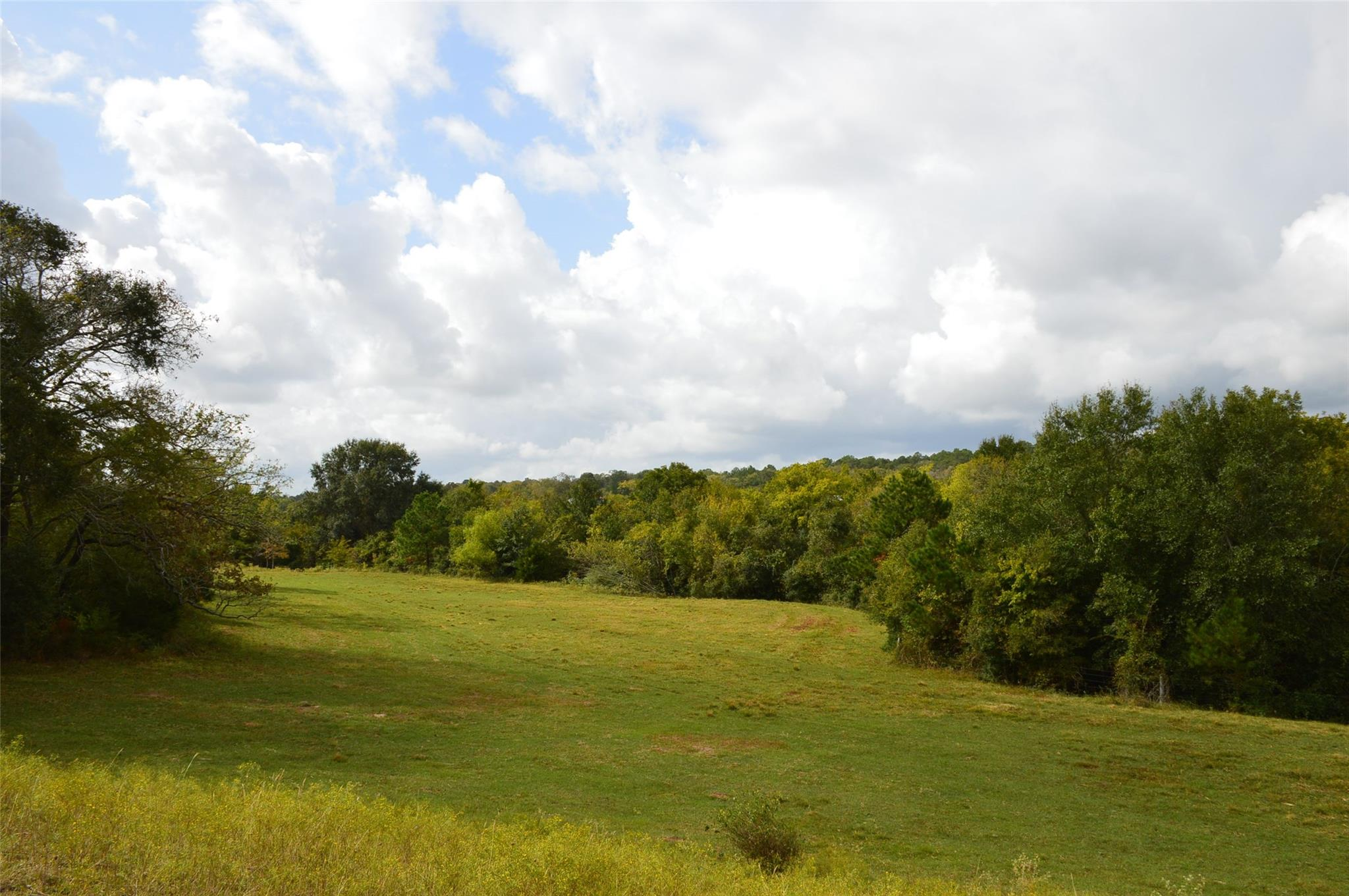 13526 County Road 407 - 50 Acres Property Photo - Navasota, TX real estate listing