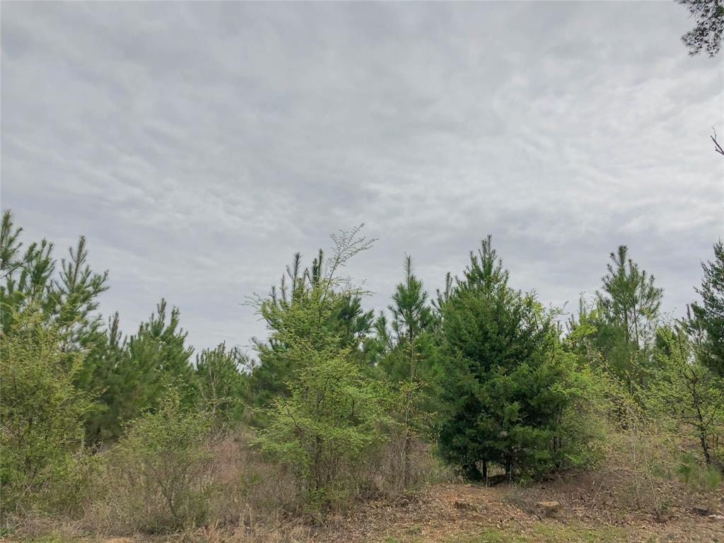 00 CR 2358 Property Photo - Linden, TX real estate listing