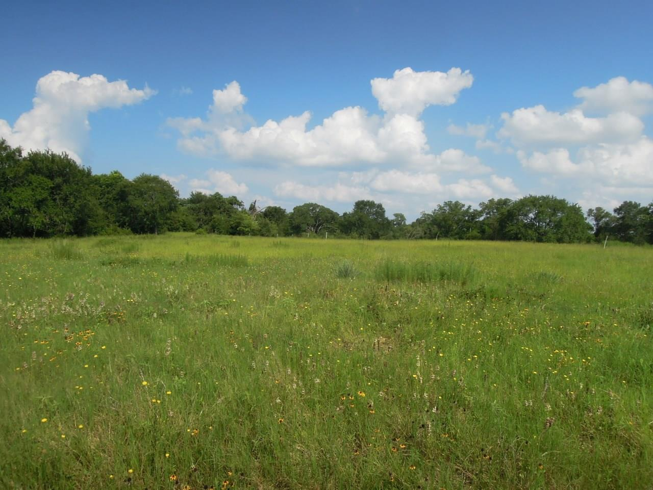 TBD Grimes CR 185 Property Photo - Anderson, TX real estate listing