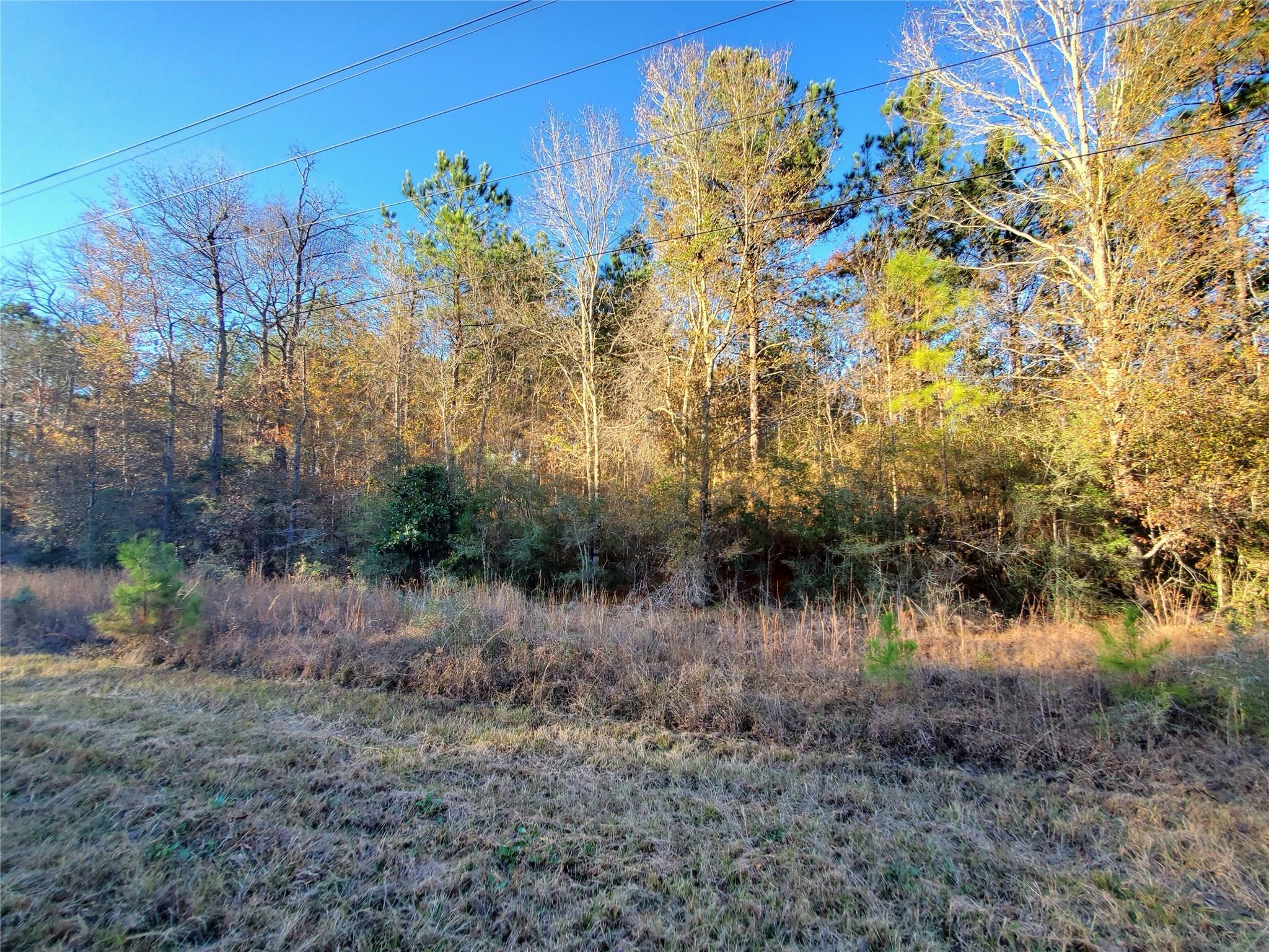 TBD FM 1013 Property Photo - Hillister, TX real estate listing