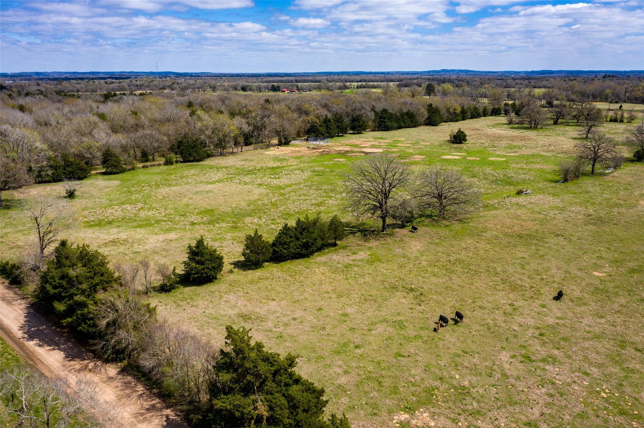 5.94 Acres Tract 5 ACR 2213 Property Photo - Palestine, TX real estate listing
