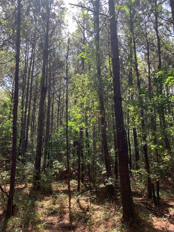 0 Easement Road, Batson, TX 77519 - Batson, TX real estate listing