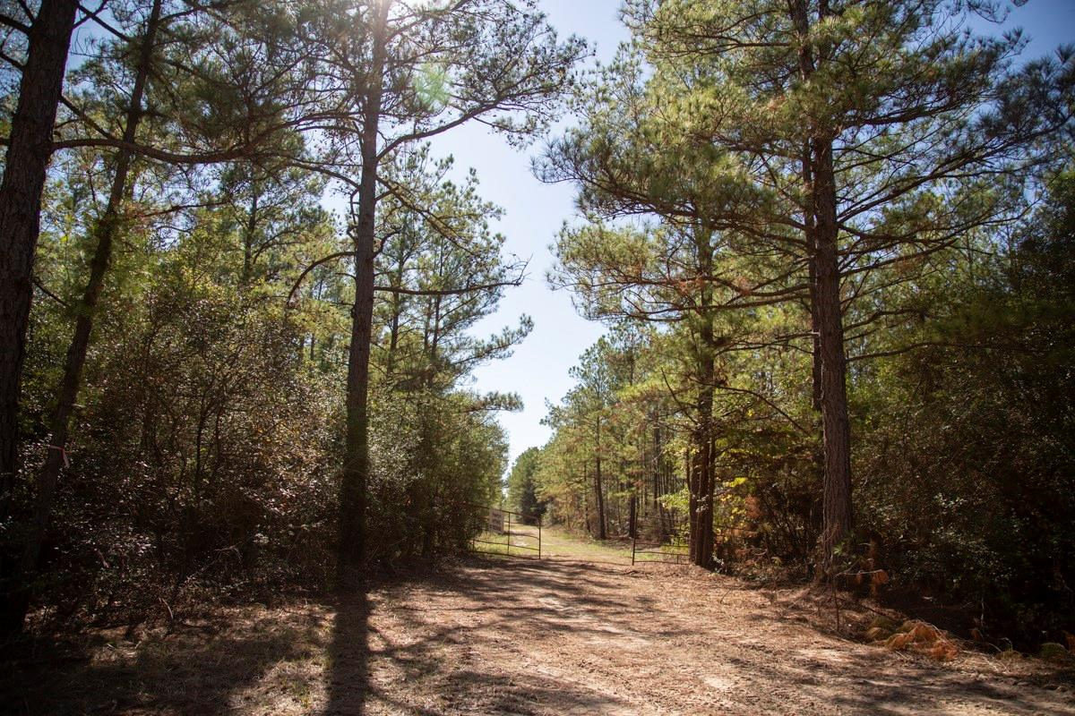 0 County Road 3585 Property Photo - Trinity, TX real estate listing