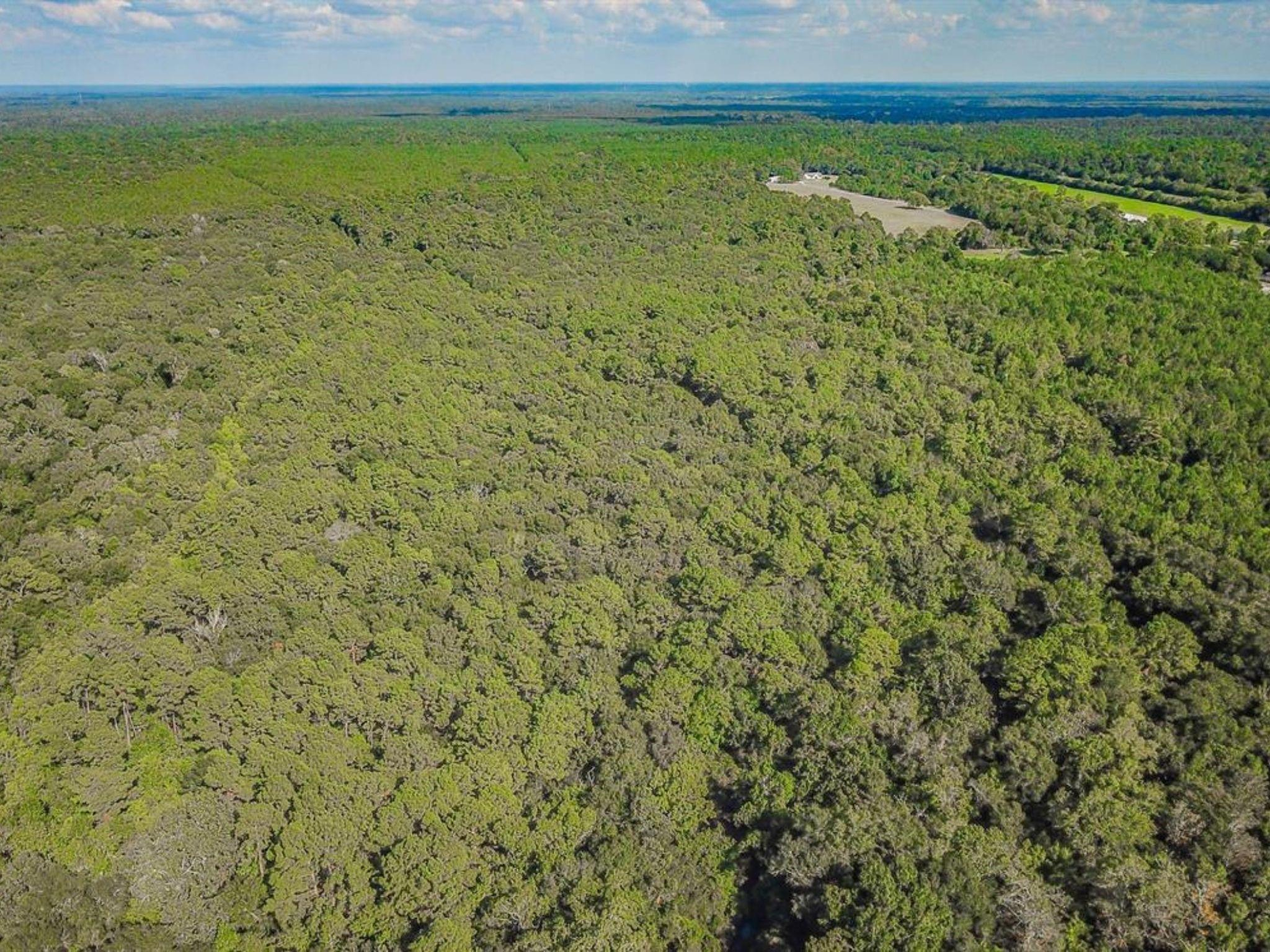 0 Hwy 321/Tract 4 Property Photo - Dayton, TX real estate listing