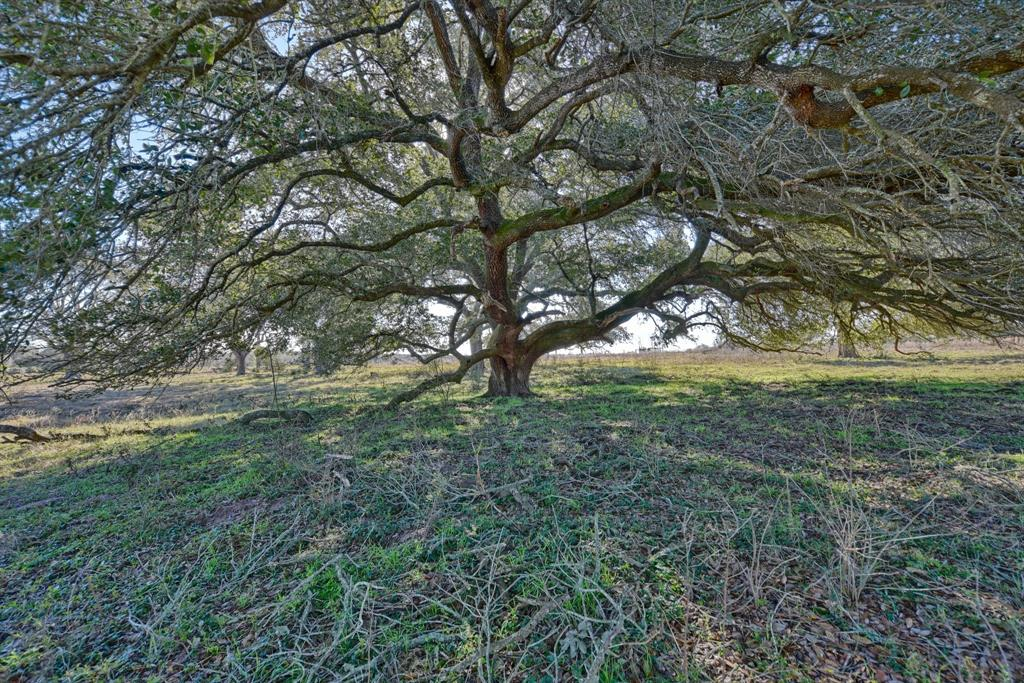 26790 Thyme Lane Property Photo - New Ulm, TX real estate listing