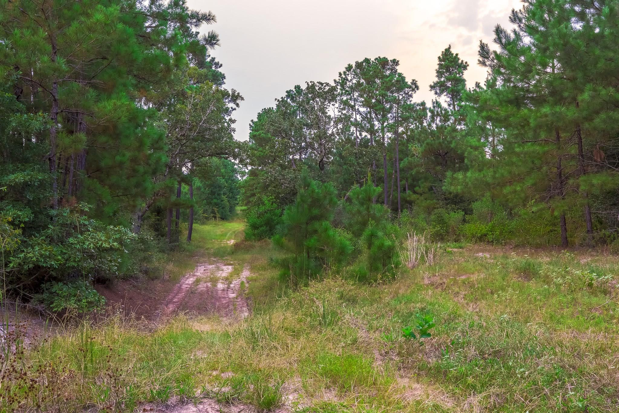 349 Scales Ranch Road Property Photo