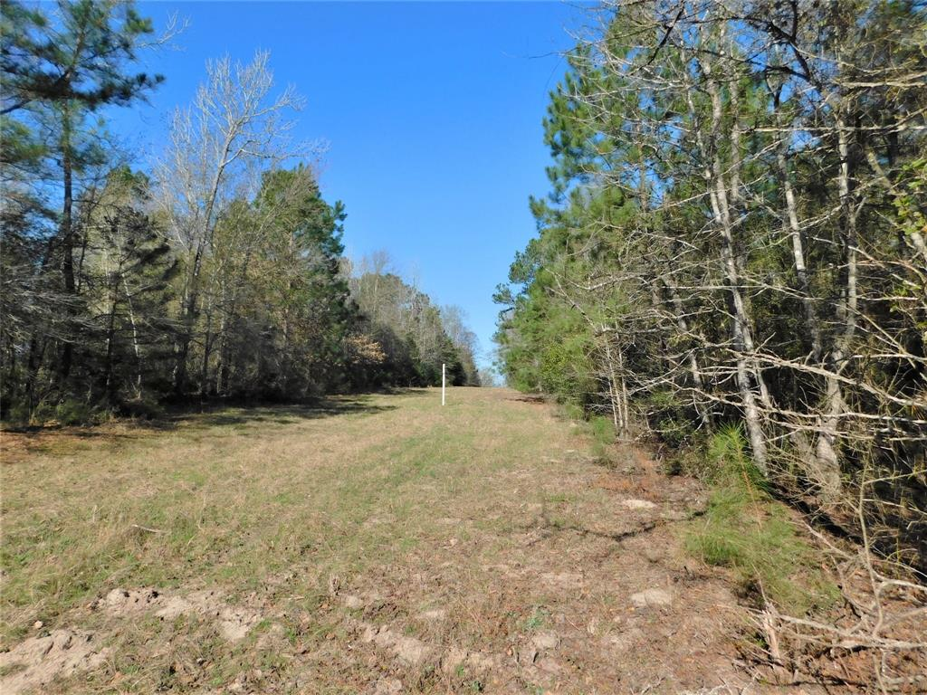 TBD Townley Ranch Road Property Photo - Dodge, TX real estate listing