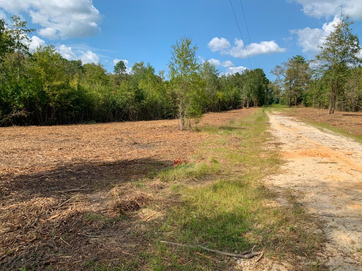 00 CR 482 Property Photo - Kirbyville, TX real estate listing