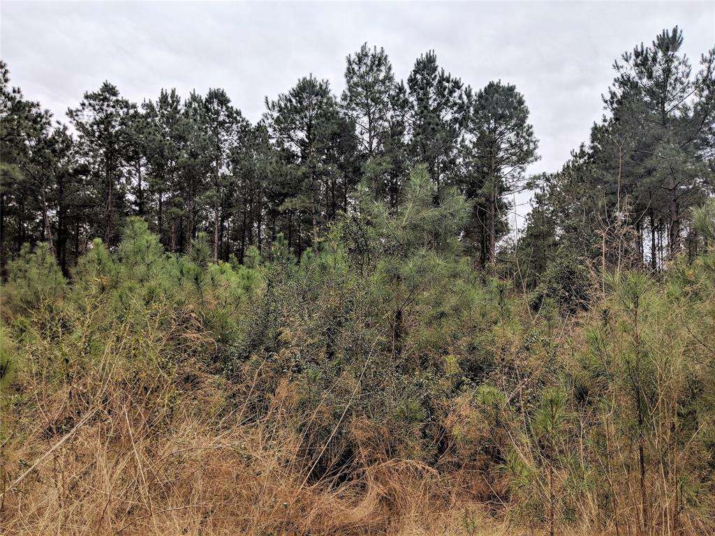 - 36 Acres county road 4416 Property Photo - Spurger, TX real estate listing