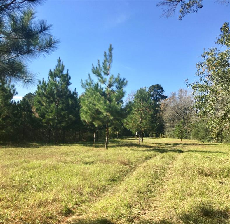 TBD Perkins Ranch Rd Property Photo - Onalaska, TX real estate listing