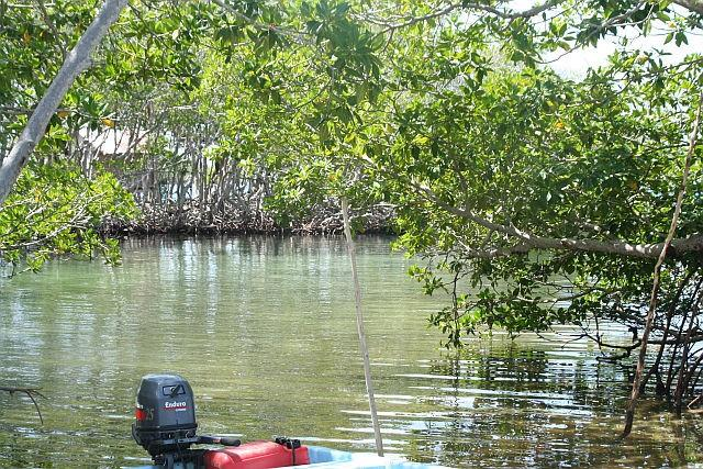 1 1 Acre Island In Belize Property Photo