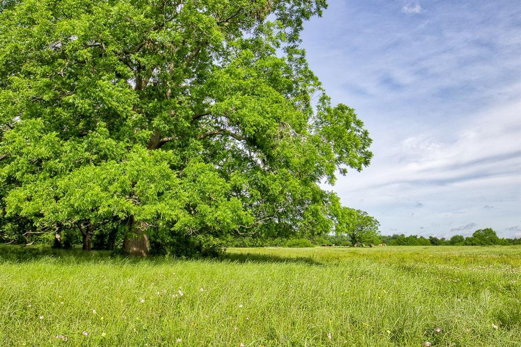 0 FM 1887, Hempstead, TX 77445 - Hempstead, TX real estate listing