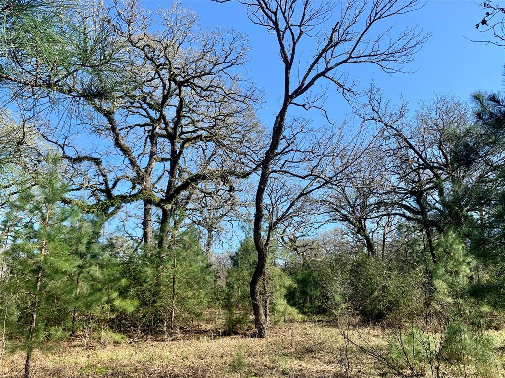 28664 Kyle Drive Property Photo - Waller, TX real estate listing