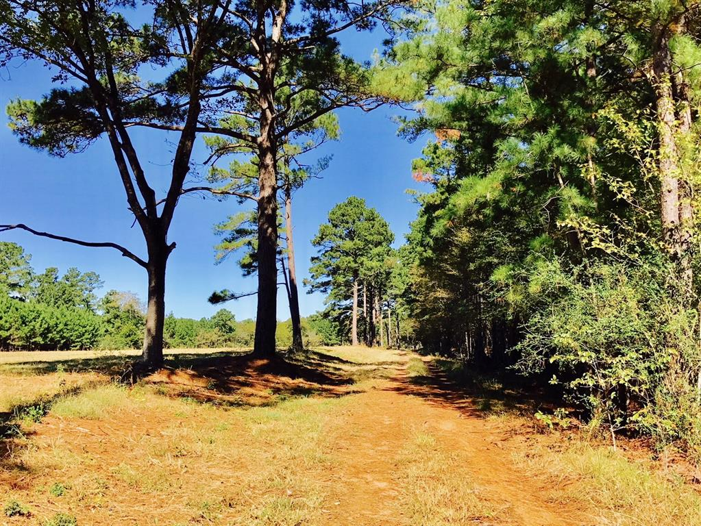 TBD County Road 2120 Property Photo - Latexo, TX real estate listing