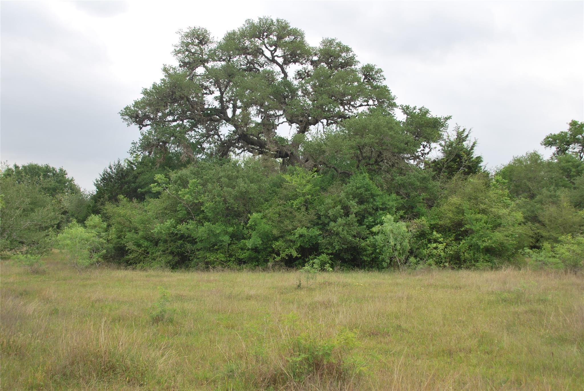 Tbd Birdhouse Hill Road Property Photo