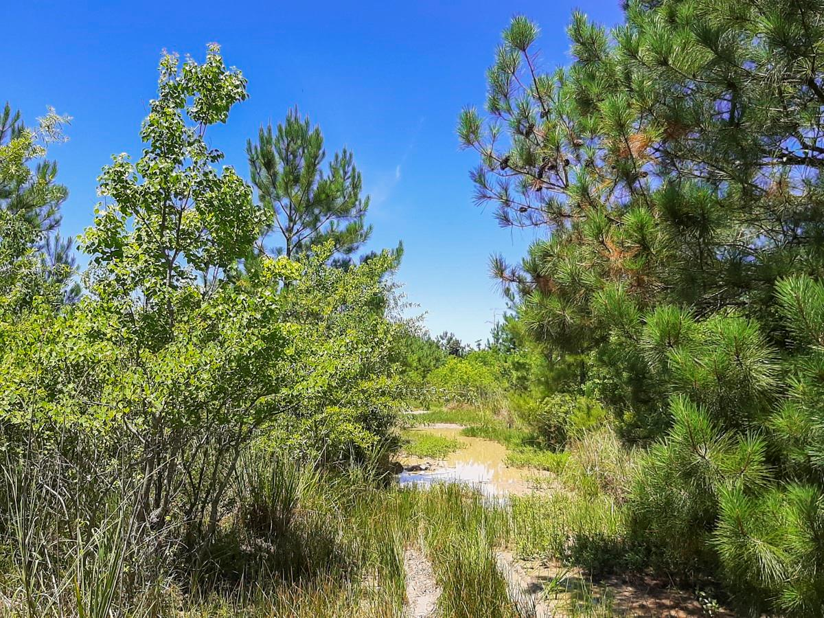 00 Pinewood Forest Property Photo - Devers, TX real estate listing
