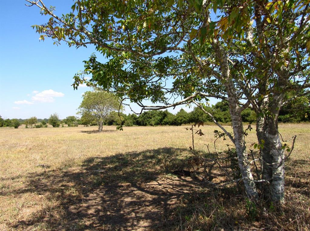000 Nixon Lake Road, Burton, TX 77835 - Burton, TX real estate listing