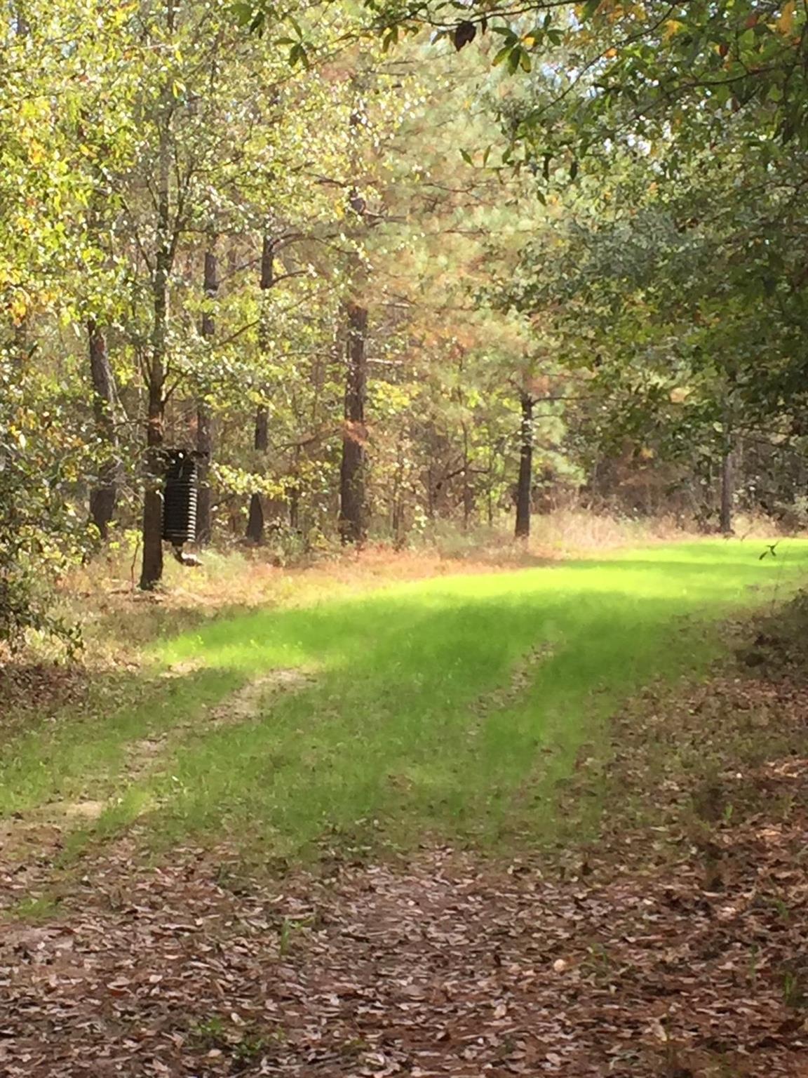 FM 1293 W Farm Road 1293 Property Photo - Kountze, TX real estate listing