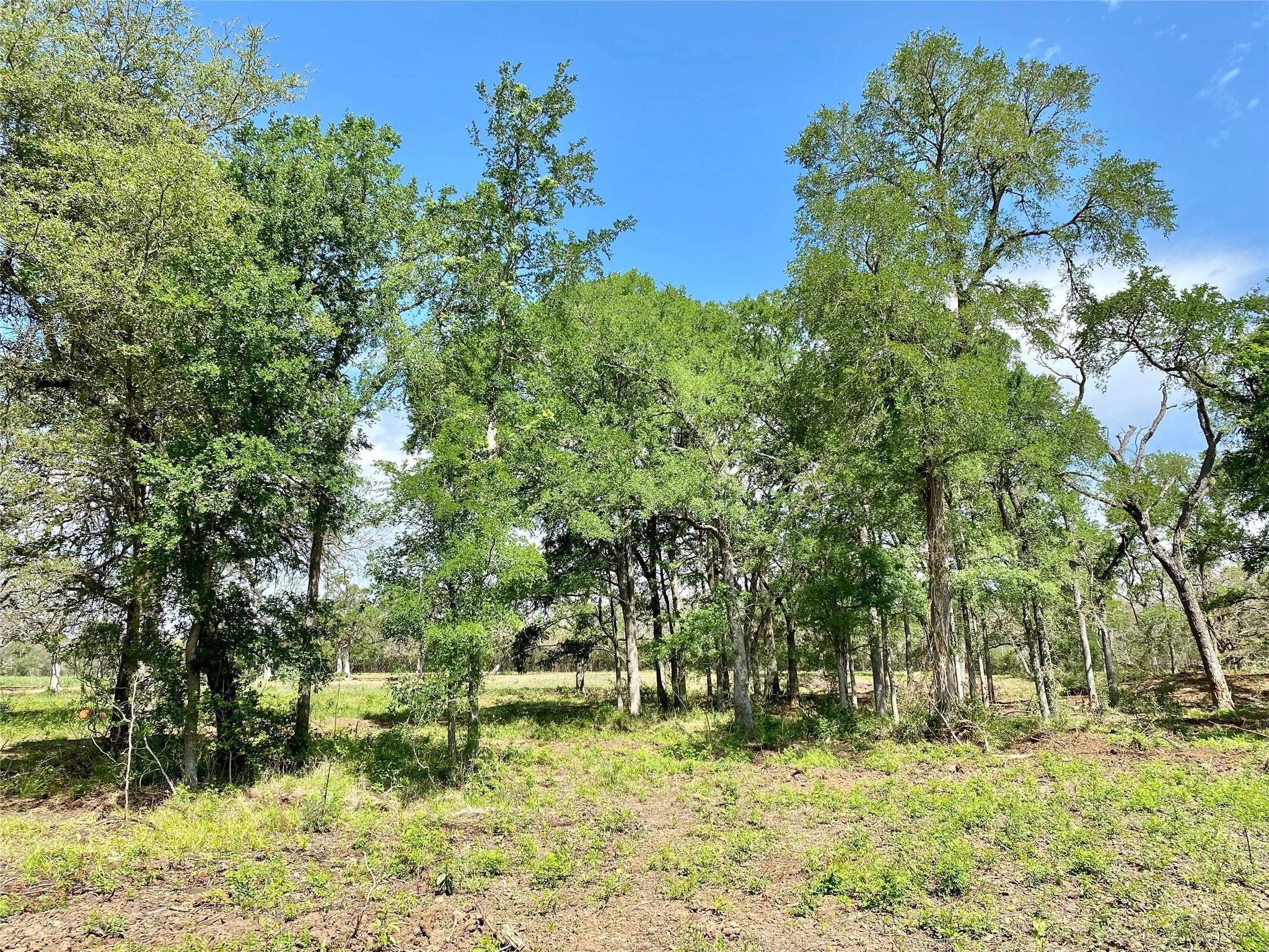 1365 Fm 2104 Property Photo