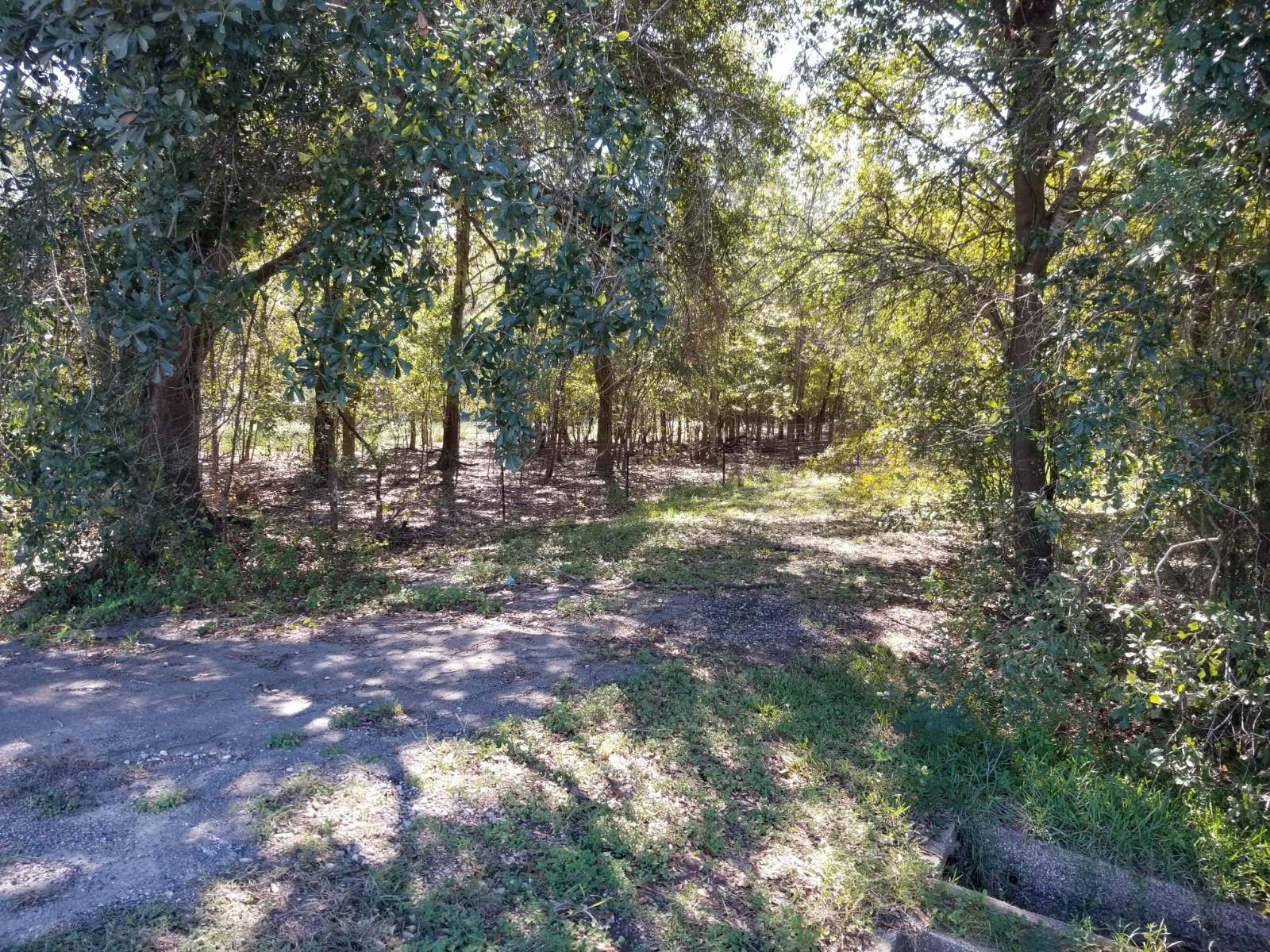 000 FM 1875 Property Photo - Beasley, TX real estate listing