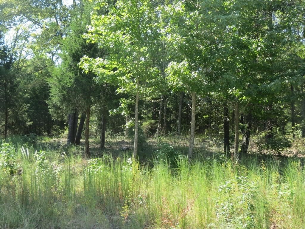 TBD Lot 4 CR 422 Property Photo - Lindale, TX real estate listing